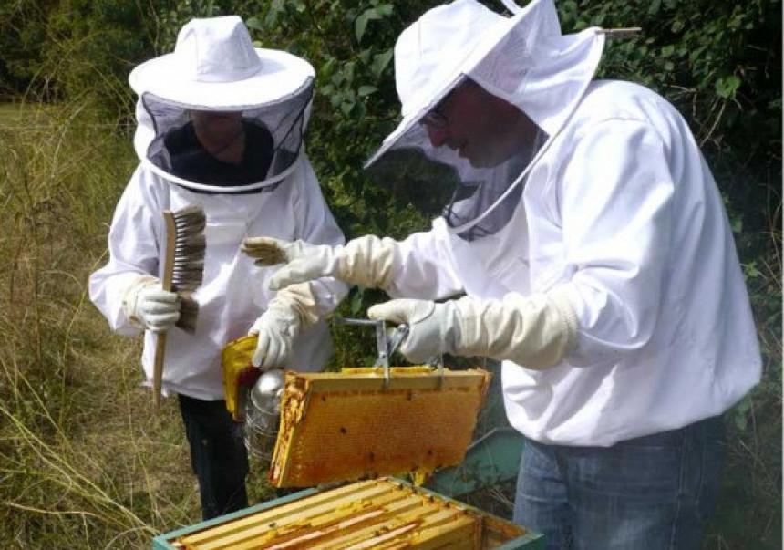 Prazna saća dižu cijenu meda u Srpskoj