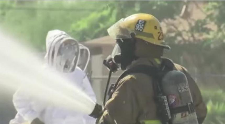 Arizona: Izujedao ih ogroman roj pčela