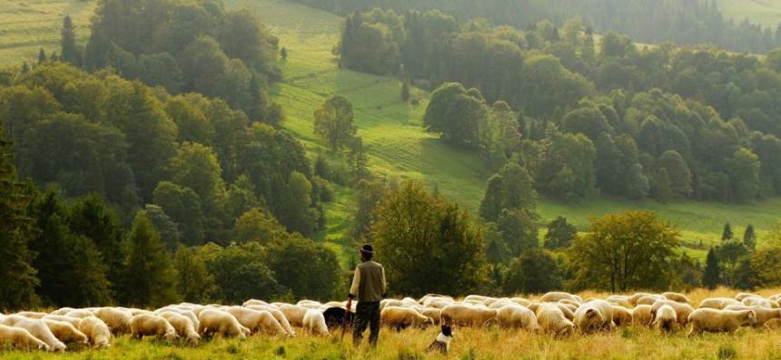 Postanite pastir