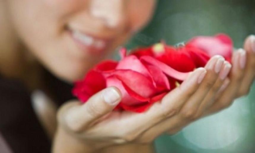 Latice ruže liječe srce i kožu