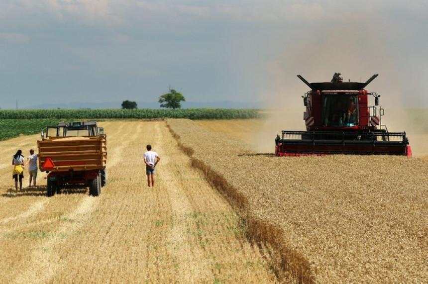 Suša uzela danak u poljoprivredi