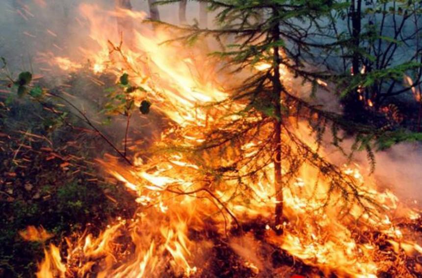 Rusija u plamenu: Sibir je i dalje okovan vatrom