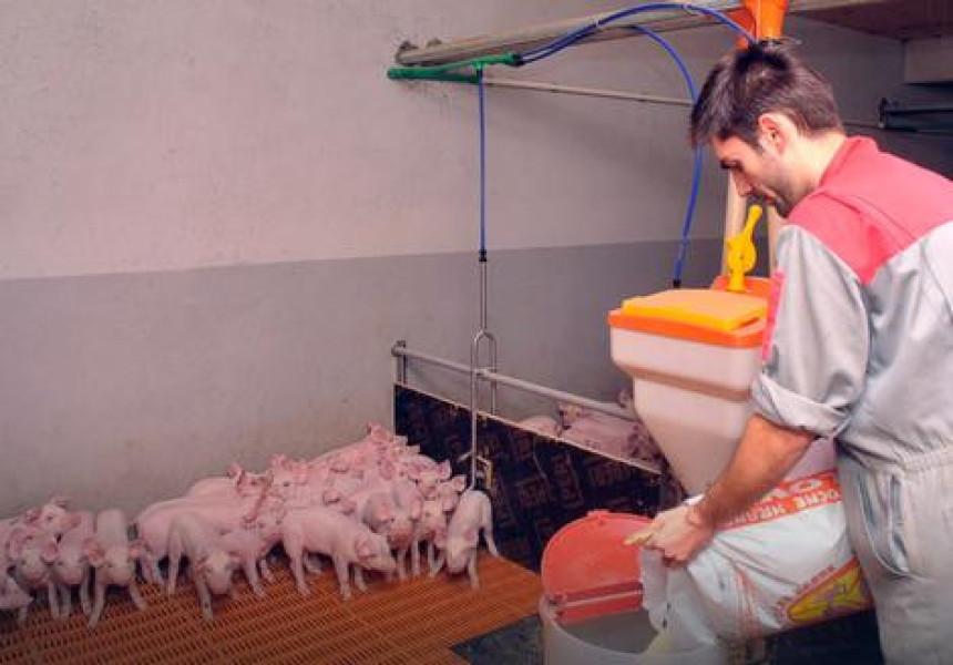 Apsurd: Piletina skuplja od prasetine