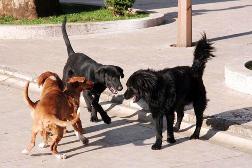 Trebinje: Čopor pasa napada prolaznike