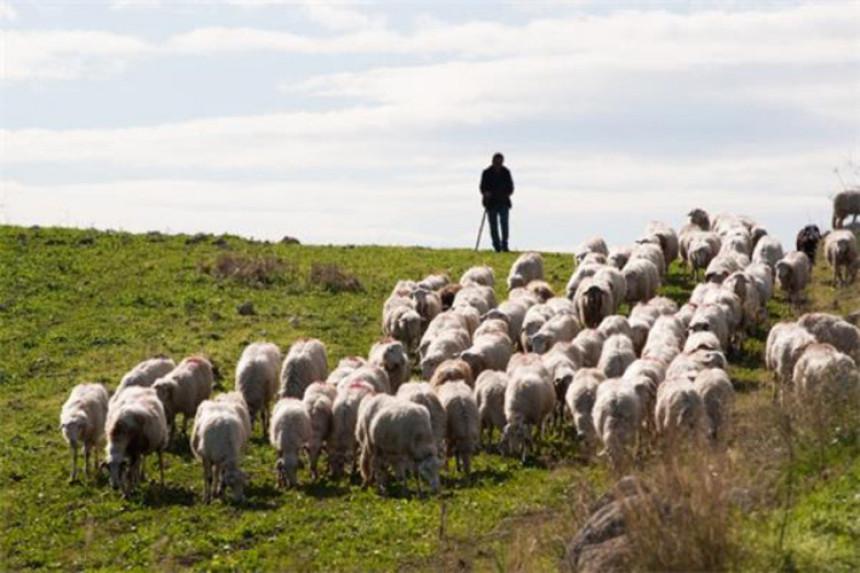 Pelagićevo: Mina ubila mladog pastira