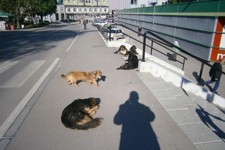 Psi lutalice izgrizli đake