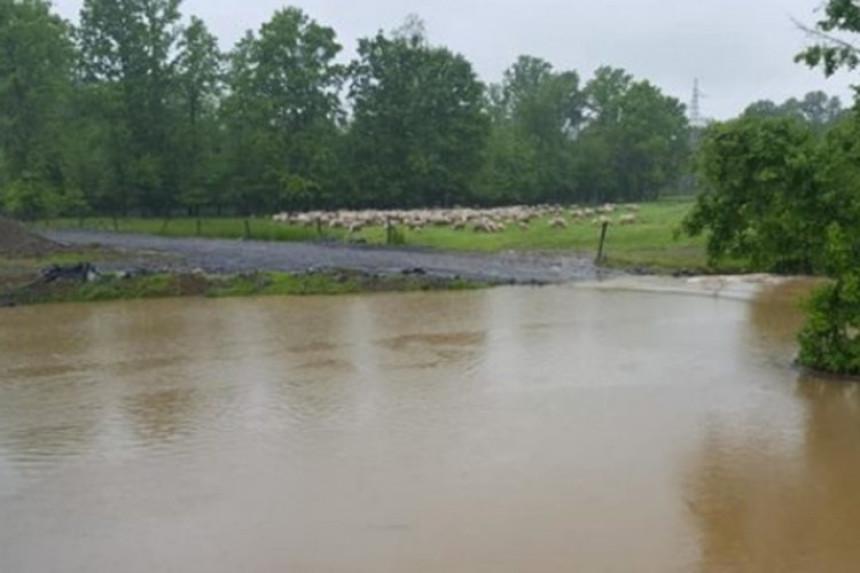 Zarobljeno stado od 550 ovaca