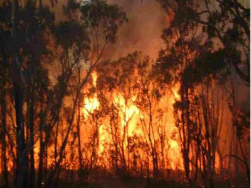 Ugašen veliki požar u voćnjaku kod Trebinja