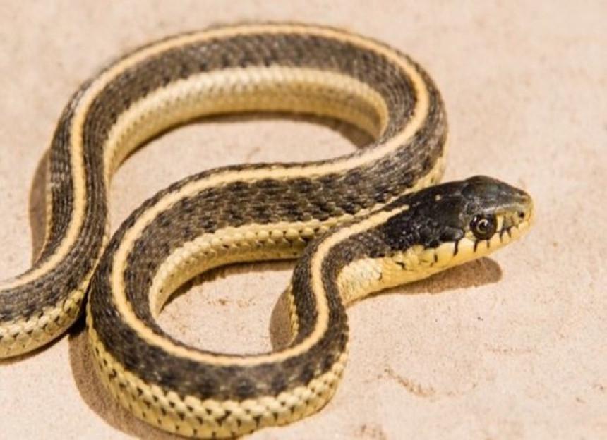 Vrtić zatvoren zbog opasnosti od zmija