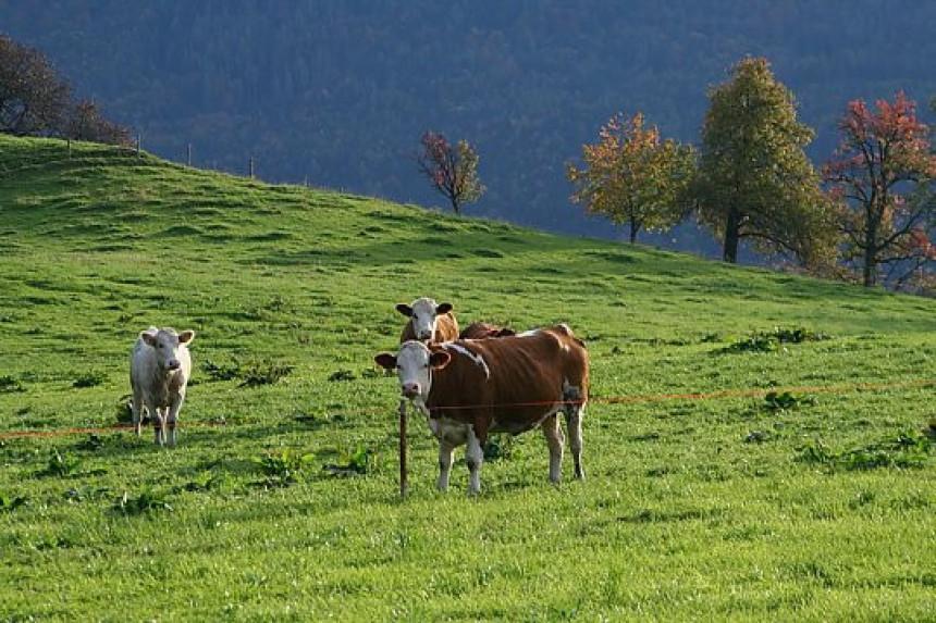Strahuju zbog nedostatka hrane za stoku