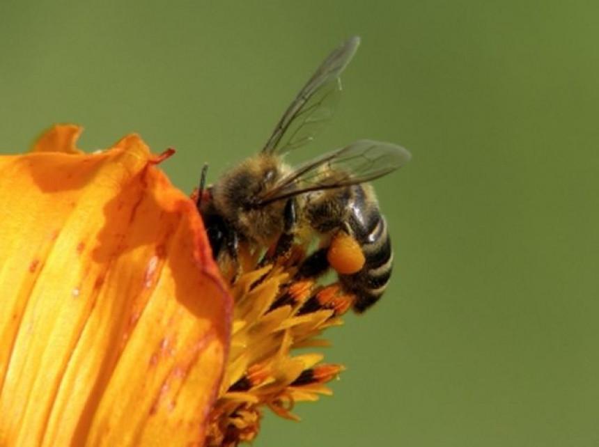 Pčele se roje, ljeto tek dolazi
