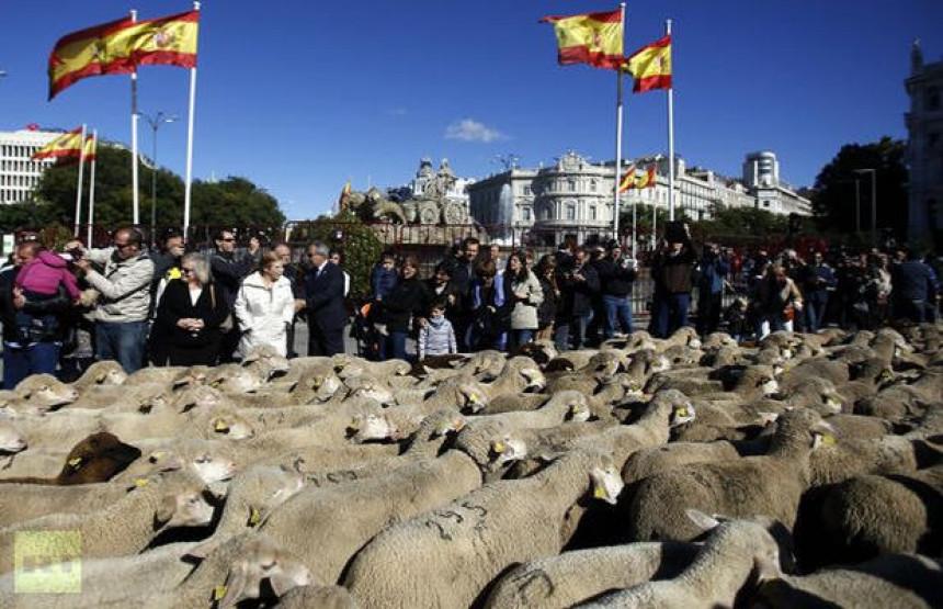 U centru Madrida 2.000 ovaca