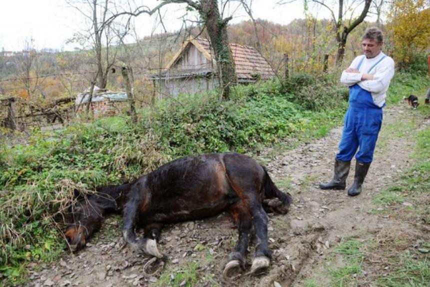Banjaluka: Medvjed ubio kobilu