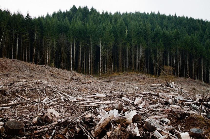 Šume sve brže nestaju