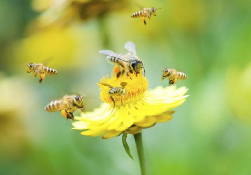 """Pčele dobile prvi """"autoput"""" u Norveškoj"""
