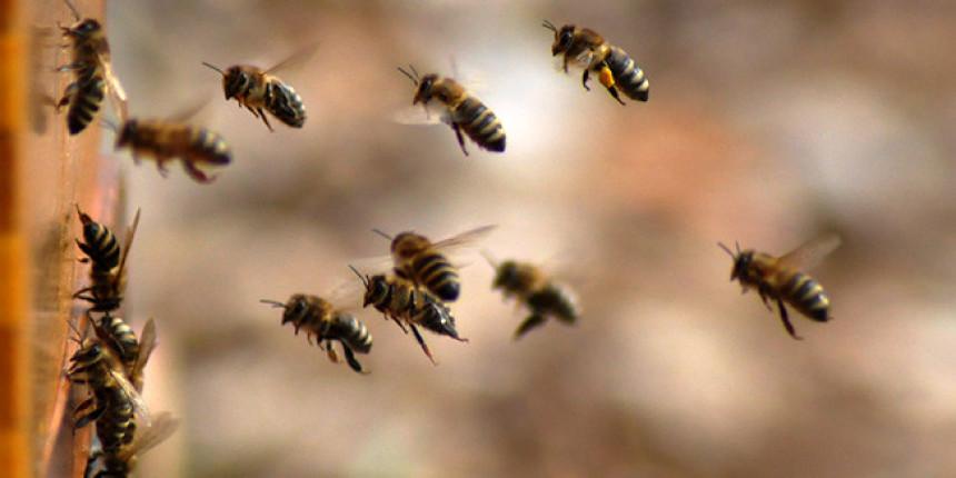 Пчеле су у шкрипцу