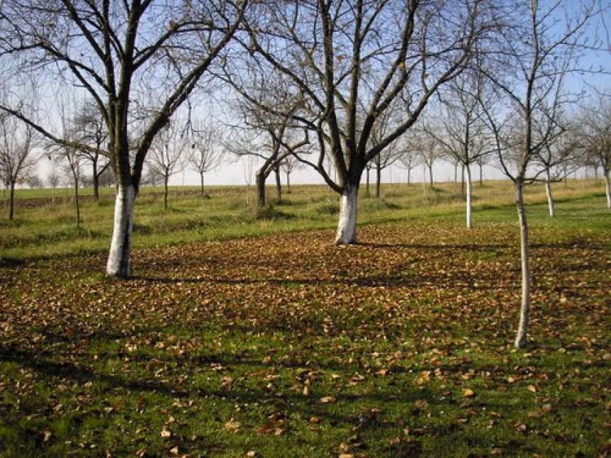 Do zime očistiti voćnjake od korova