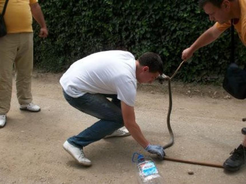 Најезда змија!