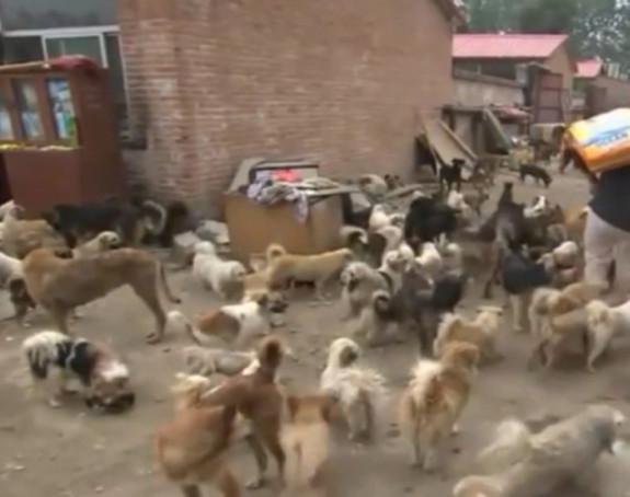 Кинескиња спасила 100 паса од лонца