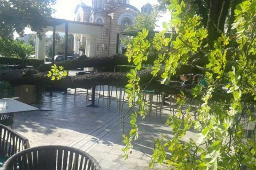 Palo stablo u bašti kafića u centru Banjaluke