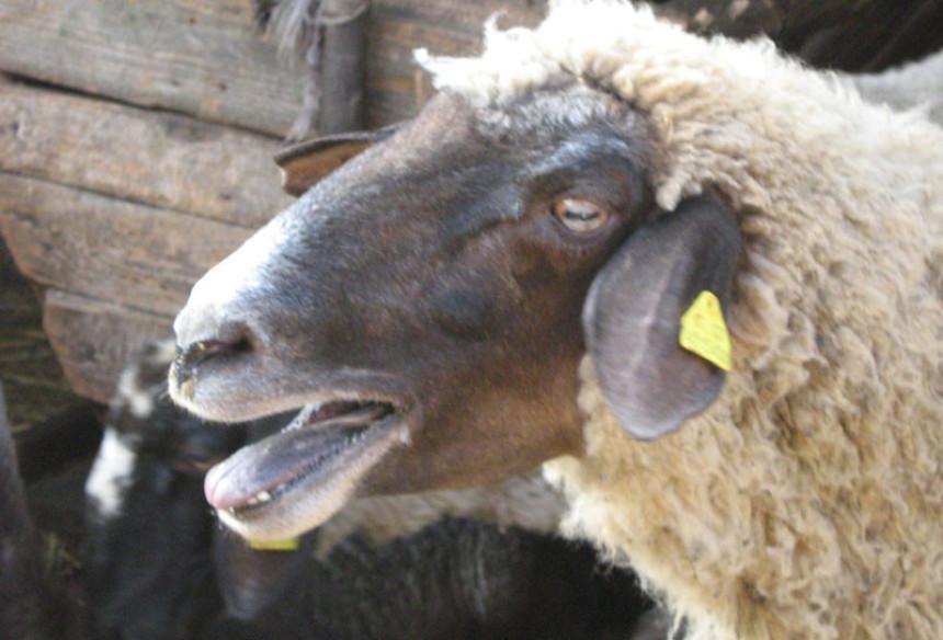 Veliki broj oboljelih životinja, 52 uginule