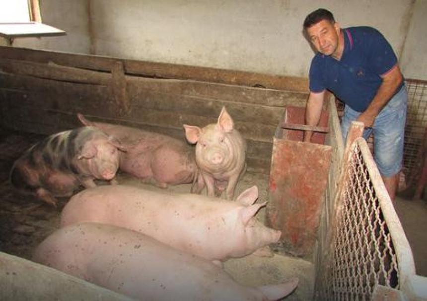 Mizerne cijene svinja u Lijevče polju