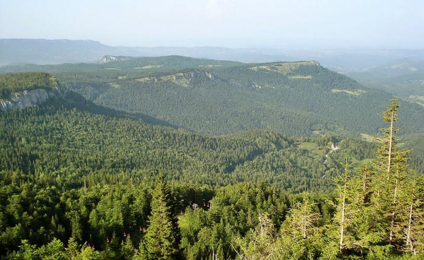 Velika pljačka Šuma Republike Srpske