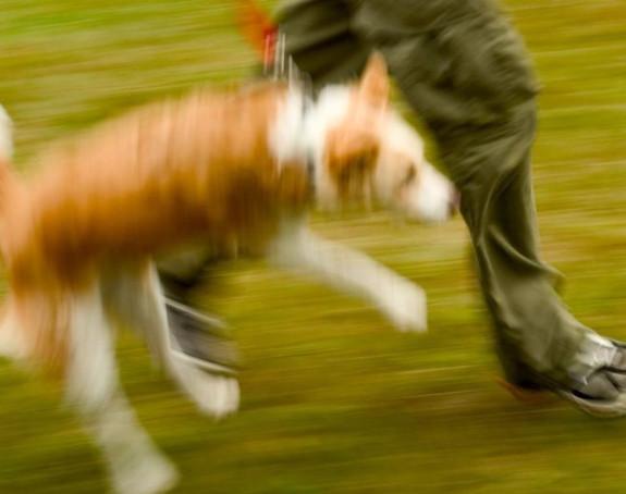 Split: Pas bez brnjice skočio na bebu u parku