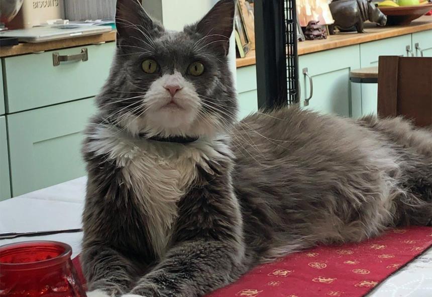 Žena potrošila hiljade evra na suđenje sa komšinicom zbog mačka!