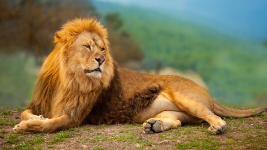 Neobično: Pokušao da prošvercuje lava iz Albanije