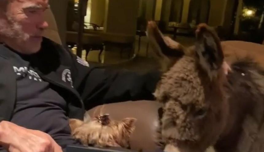 Švarceneger objavio snimak iz karantina i poslao jaku poruku! (VIDEO)