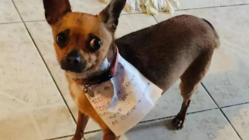 Meksikanac u izolaciji  poslao psa u prodavnicu po grickalice, pa postao hit!