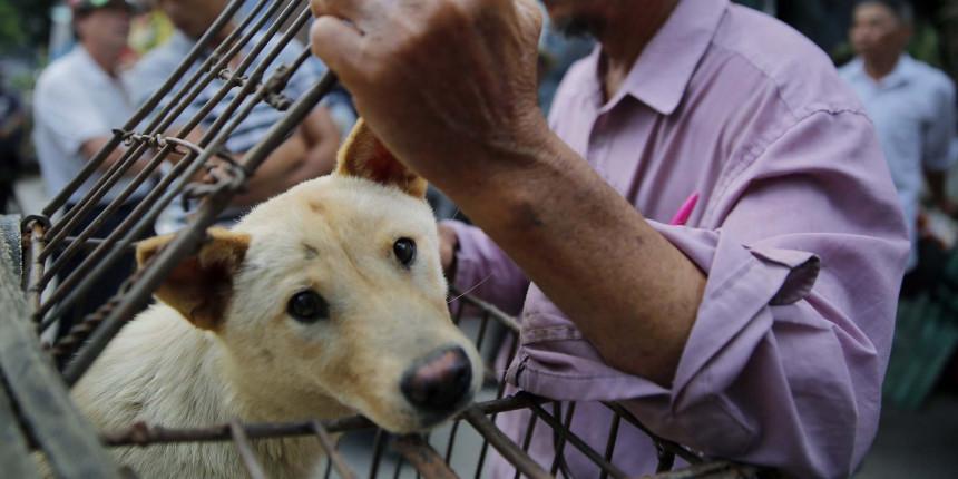 U Kini objavljen spisak životinja koje se smiju jesti