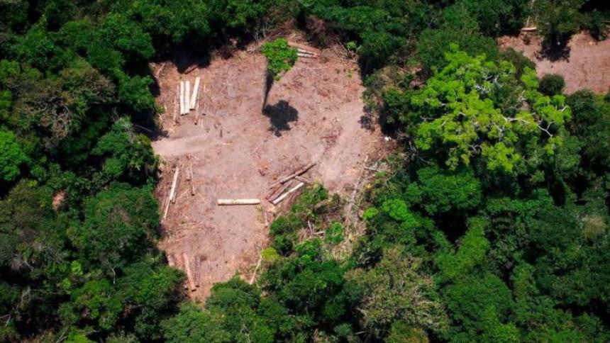 Posjekli 9.000 stabala, u zatvoru završilo 30 ljudi