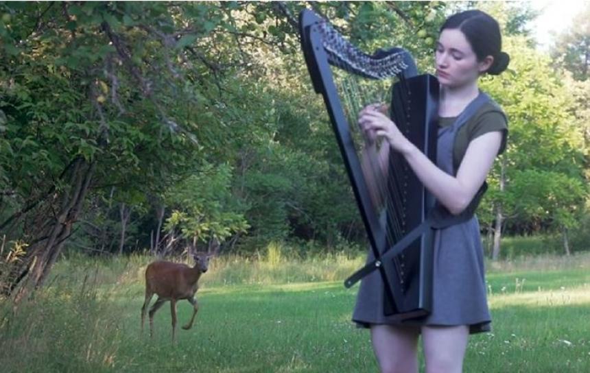 Na mini koncertu u šumi uživao jelen! (VIDEO)
