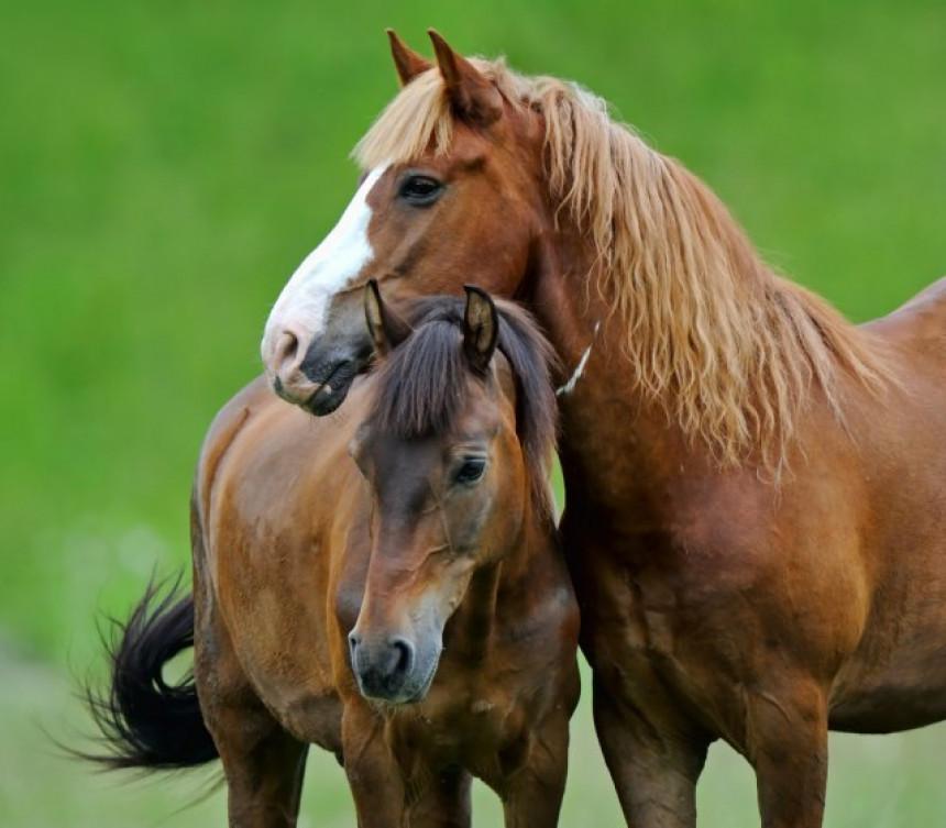 Konji nađeni iskopanih očiju, odsečenih ušiju