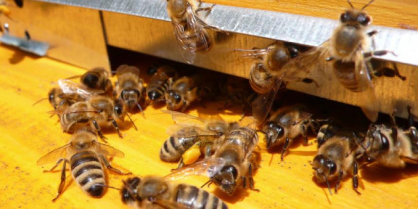 Ukrali košnice sa pčelama u selu Domrke kod Gacka