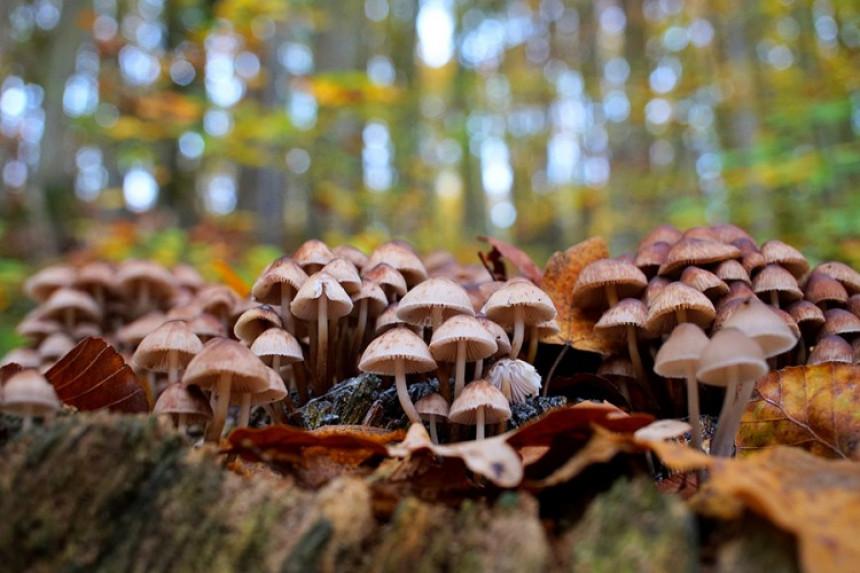 Из шуме можете убрати само килограм гљива