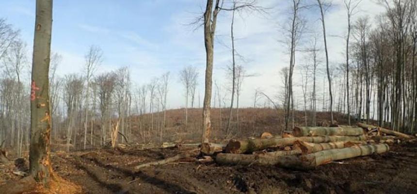 Sječom stabala opustošio privatnu šumsku parcelu