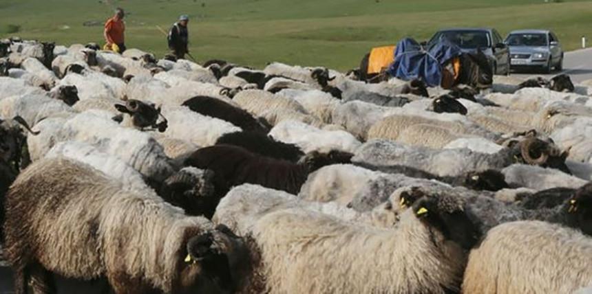 Teško povrijeđen nomad i vlasnik stada kod Doboja