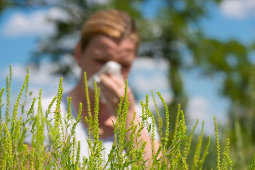 Већа концетрација полена повећава број инфекција