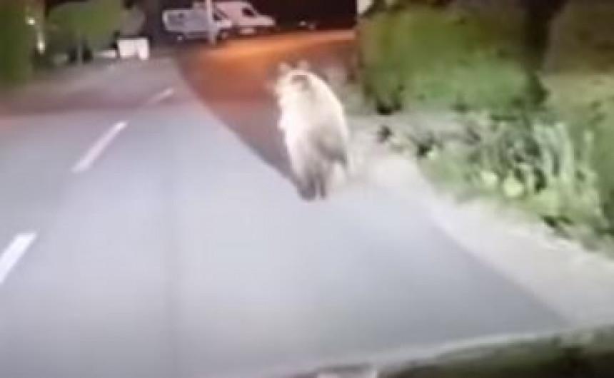 U banjalučkom naselju Karanovac snimljen medvjed
