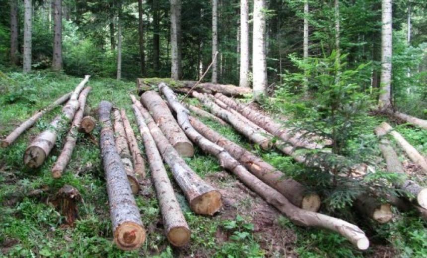 Уставни суд: Шуме нису у власништву Републике Српске