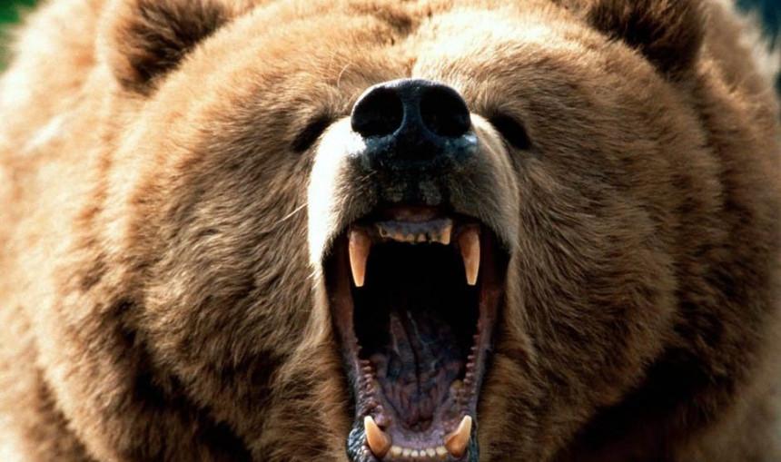 Čovjek napao medvjeda zbog psa