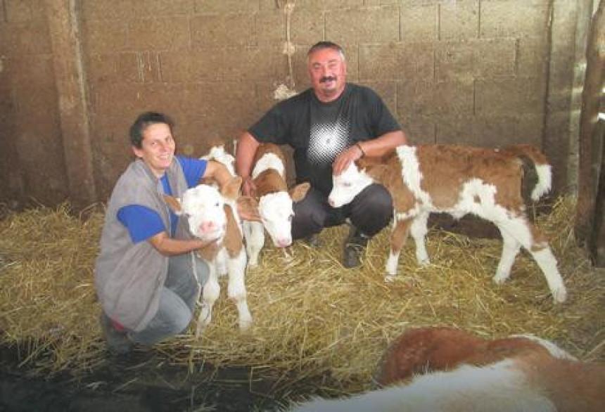 Čudo u Loznici: Krava otelila tri teleta