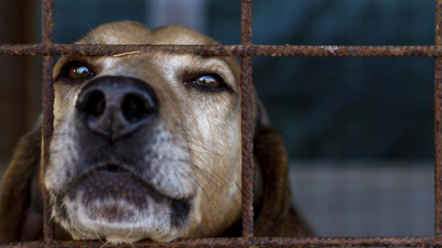 U Banjaluci ubijaju pse otrovom za miševe