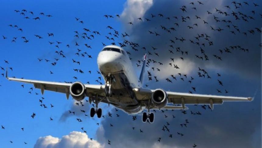 Sarajevo: Sudar aviona i ptica