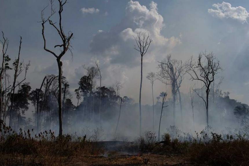 Лидери одлучили: 20 милиона долара за помоћ Амазонији