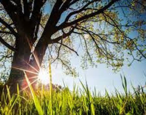 Tokom dana sunčano vrijeme