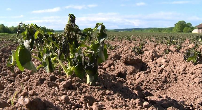 Varljivi april uništio trud poljoprivrednika